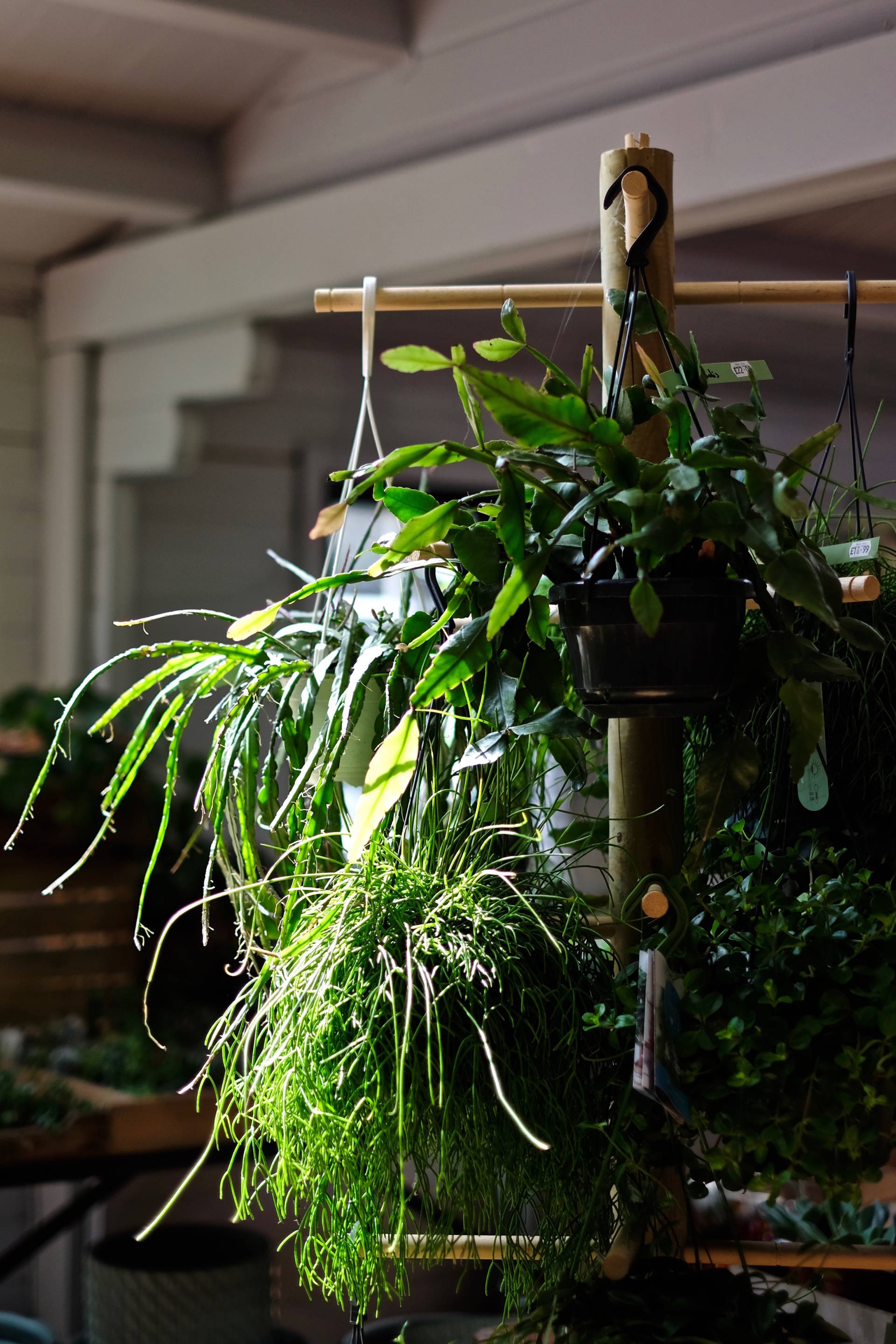 top 7 house plants